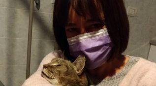 Faenza, ritrova il gatto dopo 8 anni: le foto dell'incontro