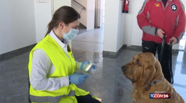 Cuneo, all'aeroporto i cani che fiutano il Covid Video