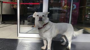 Turchia, ricoverano il padrone: il cane lo aspetta fuori dall'ospedale per giorni