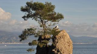 Liguria, spazzato via dal vento il pino simbolo di Santa Margherita | Foto
