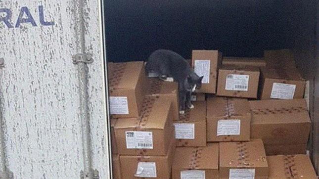 Gatto intrappolato per 20 giorni in un container: si salva mangiando caramelle