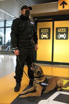Roma, all'aeroporto Fiumicino arrivano i cani anti-Covid