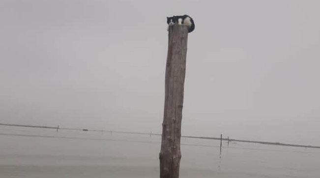 Rovigo, gatto abbandonato su un palo alto 4 metri in laguna