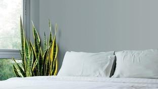 Le piante perfette per la camera da letto