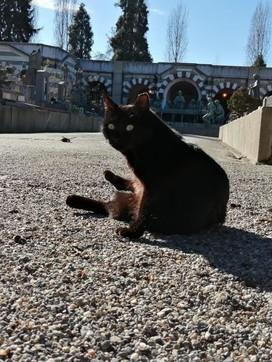 Milano, sotto sfratto i gatti del Cimitero Monumentale