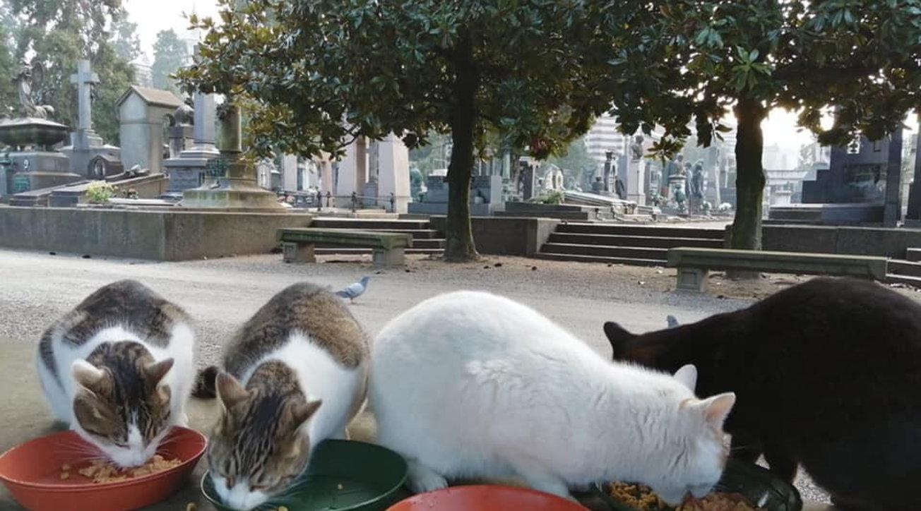 Milano, i gatti del Cimitero Monumentale sono a rischio sfratto - Tgcom24
