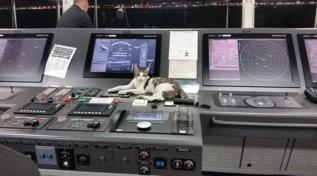 Da Gibuti a Savona, ecco il gatto che dalla stiva finisce sul ponte di comando