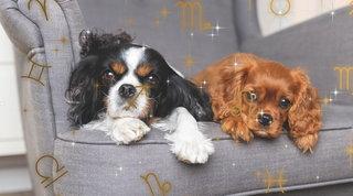 Pet Astrology: come sarà marzo per il tuo cane
