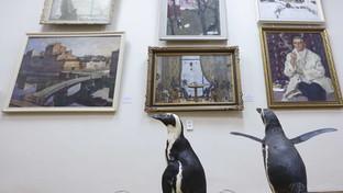 Spettacoli sospesi per Covid: i pinguini del circo russo... vanno al museo