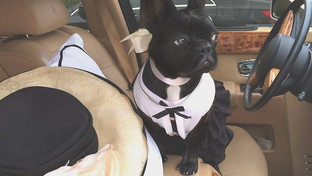 Ritrovati i cani rapiti di Lady Gaga: stanno bene