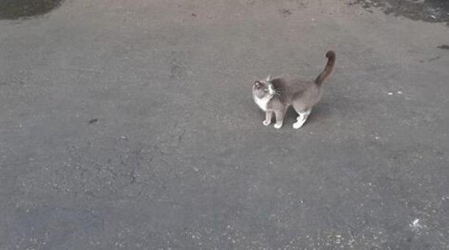 gatto, caramelle