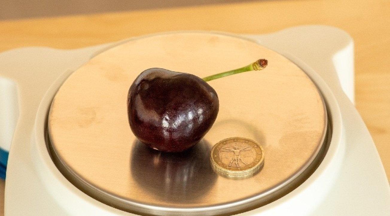 """Ecco la ciliegia più grande del mondo: pesa 26,45 grammi ed è """"made in Italy"""""""