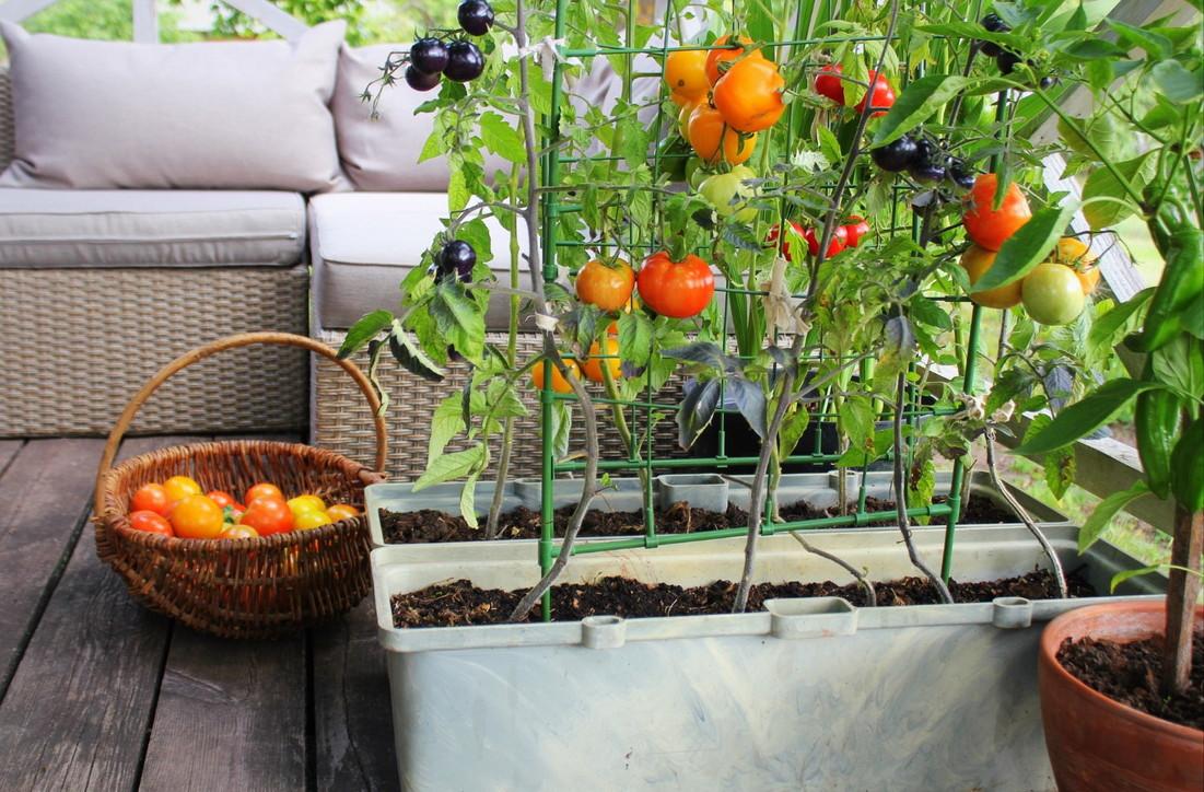 La gioia di creareun orto sul nostro balcone