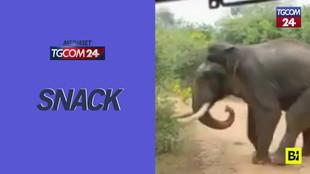 """Sri Lanka, inseguito dai turisti: l'elefante """"si ribella"""""""