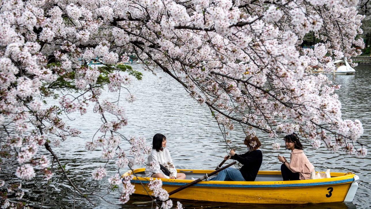In Giappone cessa lo stato d'emergenza per Covid: folla per la fioritura dei ciliegi