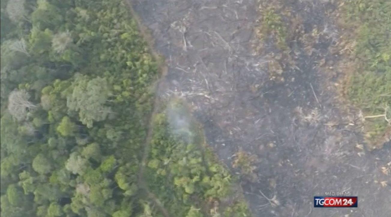 Deforestazione tropicale, nel 2020 sparita un'area grande come i Paesi Bassi