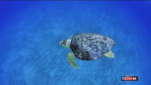 Riscaldamento dei mari, a rischio i fondali degli oceani