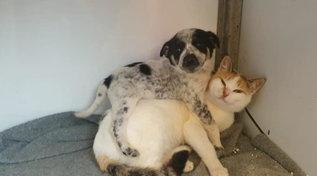 Nel santuario dei gatti di Aleppo la favola del cucciolo di cane che ha trovato la sua mamma... felina