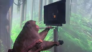 Neuralink: ecco la scimmia che gioca a Pong con la mente