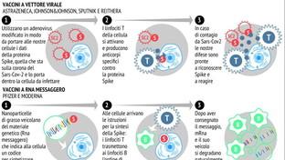 Coronavirus, le differenze tra i vaccini a mRNA e quelli a vettore virale