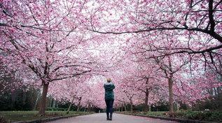 Danimarca: una splendida primavera in famiglia