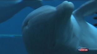 Acquario di Genova, la solitudine dei delfini