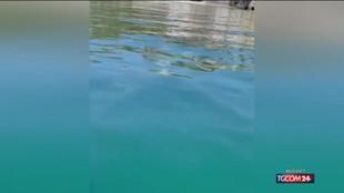 Sorrento: la balena grigia si fa accarezzare dai pescatori