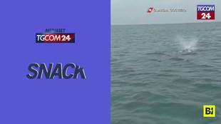 Da Ponza a Fiumicino: avvistata di nuovo la balena grigia