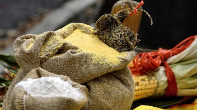 Ue, ok al primo insetto come alimento: è la tarma della farina