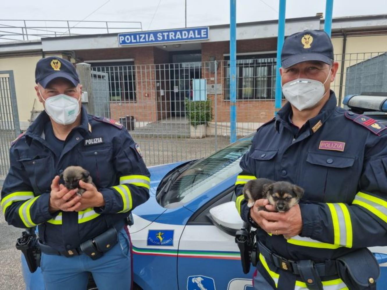 Orvieto, agenti salvano due cuccioli di cane abbandonati in autostrada