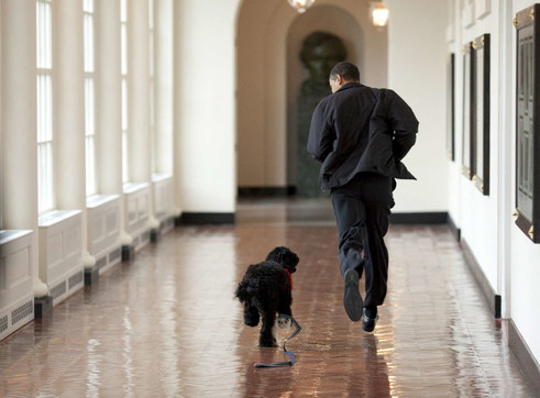 L'addio della famiglia Obama al cane Bo