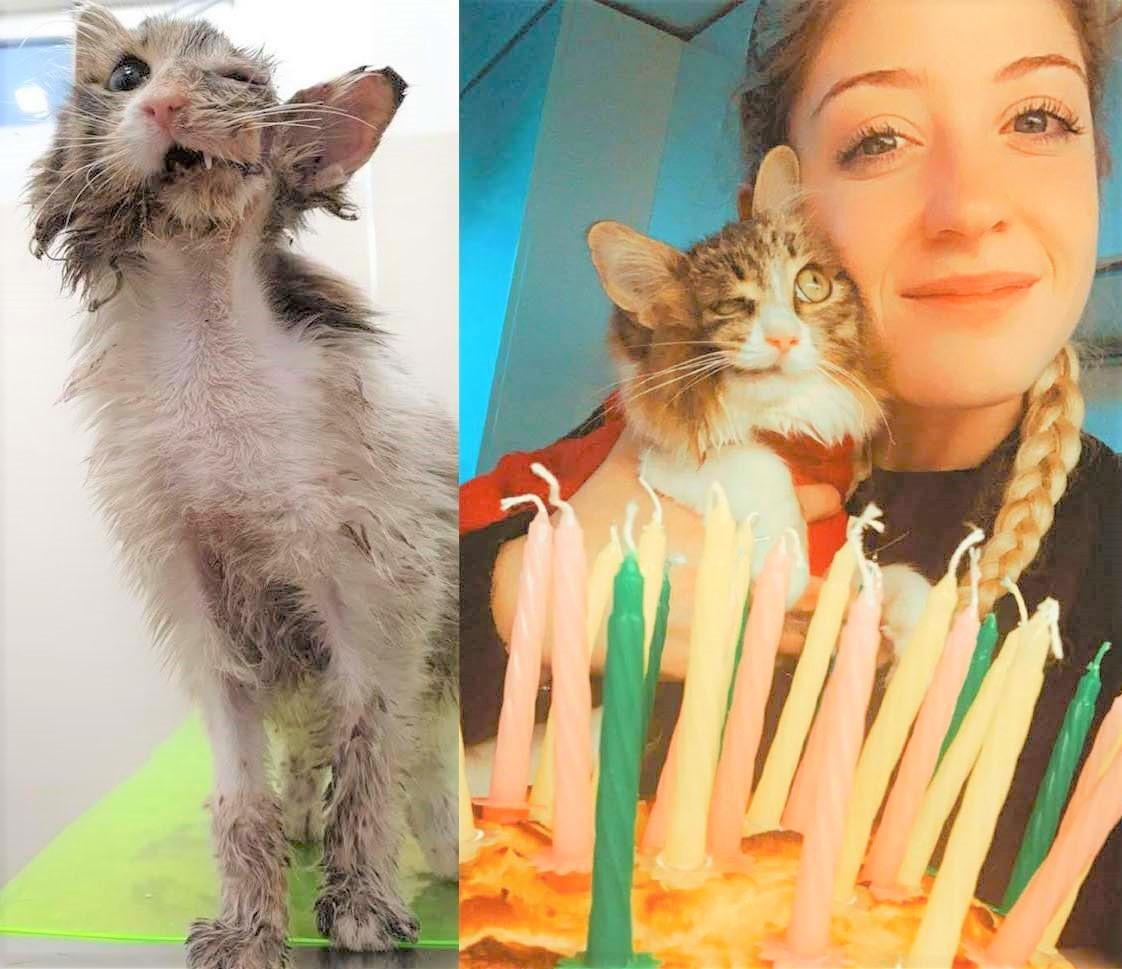 """Andria, la storia a lieto fine della gatta """"Mezza faccina"""": dall'incidente  alla nuova vita"""
