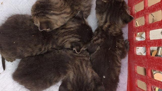 Milano, dallo sgombero del campo rom spuntano 4 gattini in cerca di casa