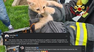 Luca Zaia racconta la storia di un gattino ma viene blastato dal Veneto imbruttito