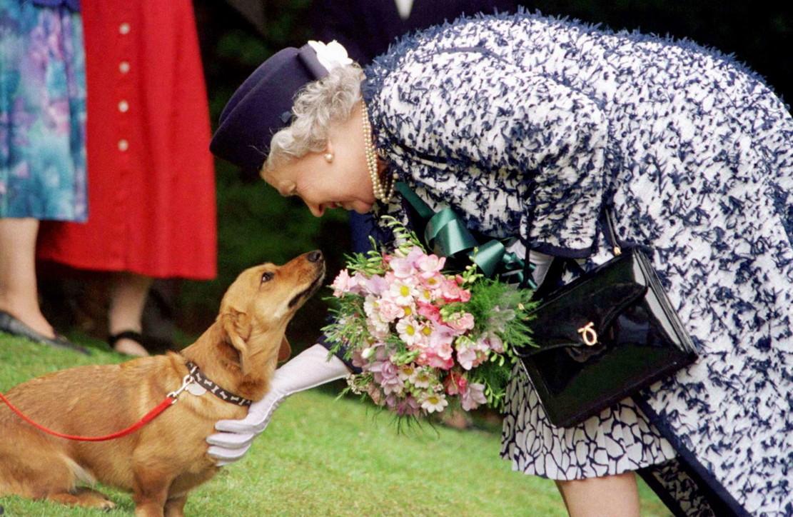 La Regina Elisabetta e la sua passione per i cani