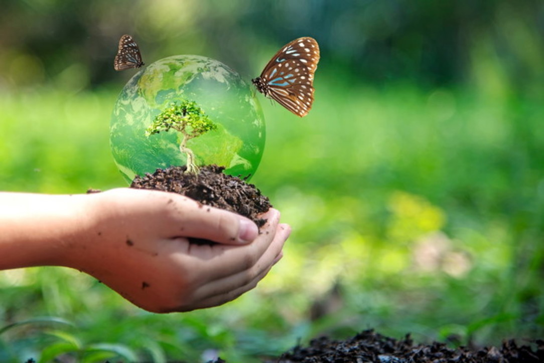 Cinque pillole per aiutare la biodiversità