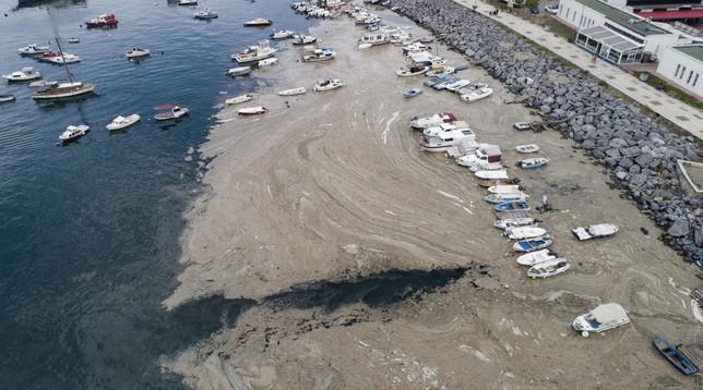 Inquinamento e cambiamento climatico, allarme a Istanbul: il mar di Marmara è invaso dallamucillagine