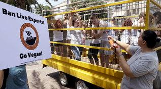 In Israele protesta animalista contro il trasporto di animali vivi