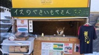 Addio a Ken, il popolare shiba che offriva patate dolci arrostite nel chiosco diHokkaido