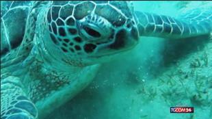 Oggi è la giornata mondiale delle tartarughe