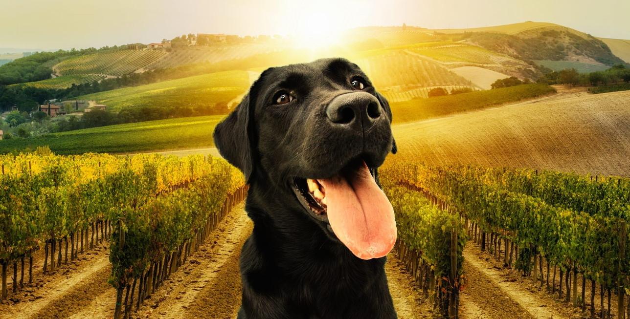 I grandi cammini italiani insieme al proprio cane