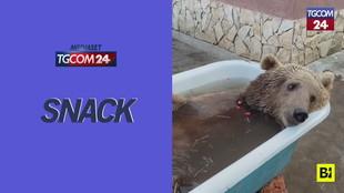Partita in tv e bagni nella vasca: ecco la vita di Balù