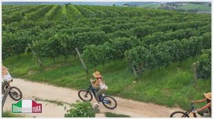 """""""Un'esperienza tra le vigne, la Valpantena"""""""
