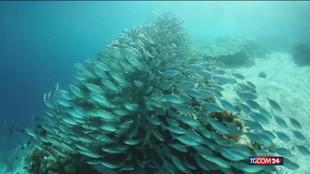 La grande barriera corallina recupera, ma resta la minaccia clima