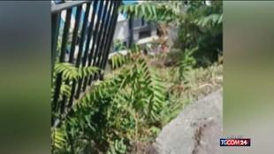 """Capri, minibus """"vola"""" per diversi metri: numerosi feriti"""