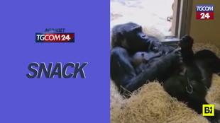Coccole e relax, mamma gorilla si gode il suo cucciolo