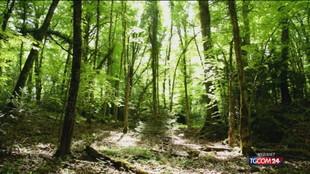 """Foreste patrimonio dell'Unesco. Ecco i """"luoghi"""" d'Italia"""