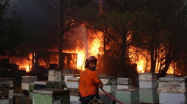 Grecia, fiamme a nord di Atene: migliaia di sfollati e decine di case distrutte