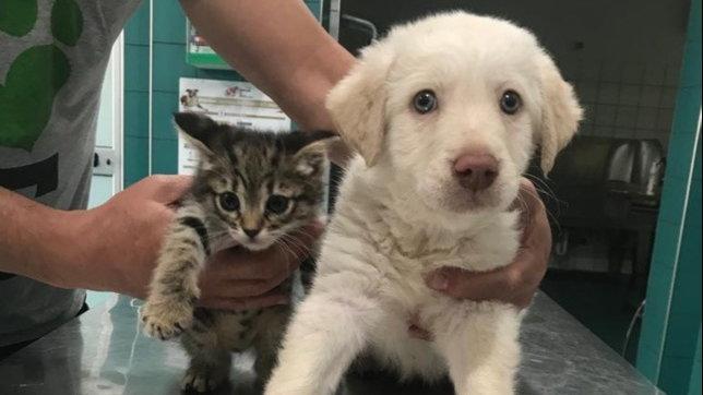 Hola e Micia, adozione insieme per il cane cieco e il suo gatto-guida