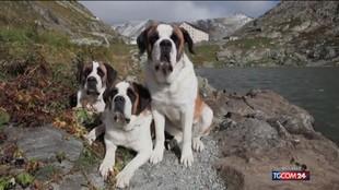 26 agosto: è la giornata internazionale del cane
